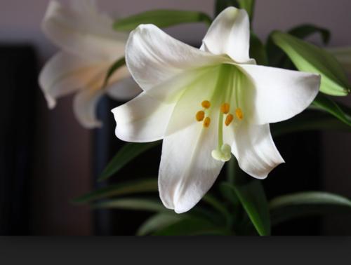Easter Sunday Sermon / Pastor Terry Defoe / Darkness Dispelled! / Matthew 28:5-7