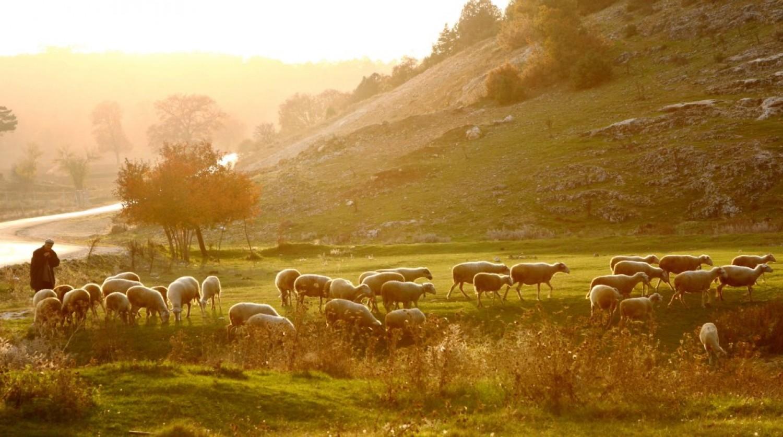 Sermon / Pr. Irwin Pudrycki / Sunday April 17th 2016 - / Psalm 23 & Revelation 7:13-17  / Wanting for Northing