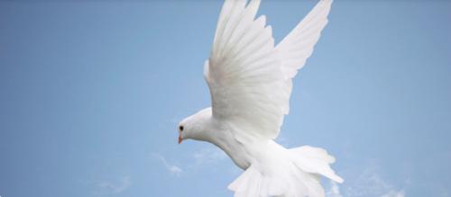 Sermon - May 19th, 2013 - That's the Spirit