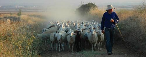 The Good Shepherd - John 10:1-10 Sermon / Sunday May 11th 2014 / Season of Easter