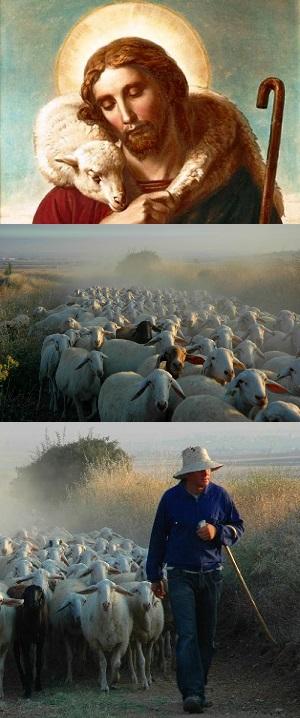 The Good Shepherd - John 10:1-10 Sermon / Sunday May 11th 2014 / Season of Easter  - Image 1