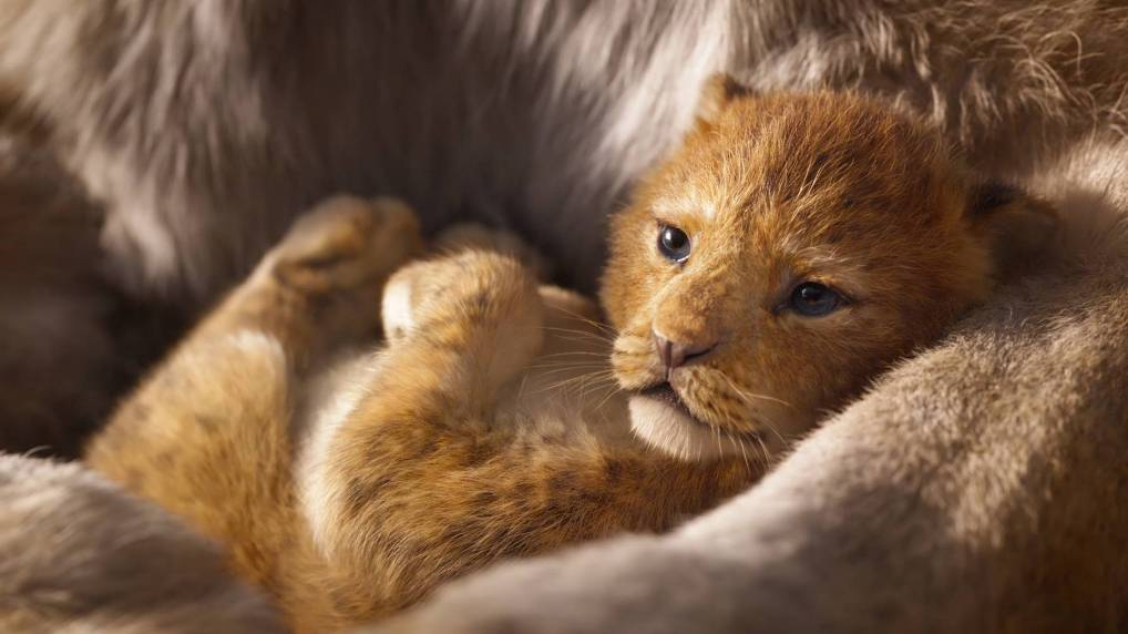 The Lion King: Live Action (2019) Jon Favreau - Movie Review - Image 11