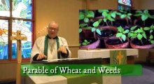"""Distinguishing Wheat From Weeds"" Sermon For Sunday July 19th"